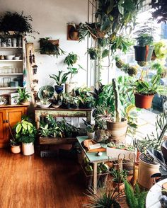 """8e2fc2fce Pistils Nursery on Instagram: """"This tangle of green. This spot of morning  sun. Today will be a good day. 💚 @mavencollectpdx pop-up."""""""