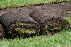 Plant an Instant Lawn with Sod - Transform bare soil to green lawn in less than a day. Use quality sod to create a new lawn or fill bare patches in existing turf...