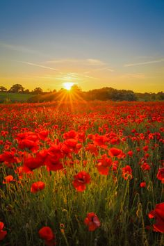 Photo Poppy sunset by Matty Graham on Beautiful World, Beautiful Places, Spring Scenery, Beautiful Sunrise, Nature Pictures, Amazing Nature, Pretty Pictures, Beautiful Landscapes, Wild Flowers