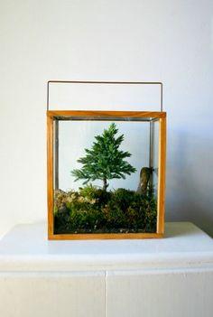 Love this terrarium.