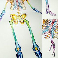 watercolour anatomy art skeleton
