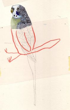 Carll Cneut - collage