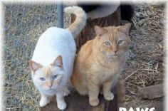 Help support Cats rescued from Hoarder. Paws Rescue, Go Fund Me, Pets, My Style, Animals, Fashion, Moda, Animales, Animaux