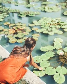 "12.1k Likes, 50 Comments - Belen Hostalet Tribaldos (@belenhostalet) on Instagram: ""Water Lily paradise in our beautiful @sukhothaibkk  @kiwicollection #bangkok #thailand…"""