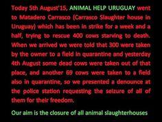 Intento de rescate de vacas en inanición en el matadero Carrasco por con...