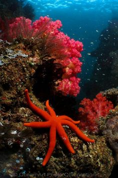 Beautiful Under Water Scene.. Only God could create something this AMAZING!! (: