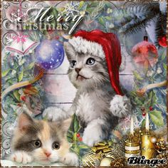 christmas animals blingee | Cat-merry-christmas Animated Pictures for Sharing ...