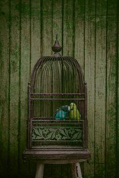 """Sweet, little """"love birds"""" parakeets~❥"""