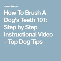 How To Brush A Dog's Teeth 101: Step by Step Instructional Video – Top Dog Tips
