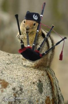 PetsLady's Pick: Funny Bagpipe Chipmunk Of The Day...see more at PetsLady.com -The FUN site for Animal Lovers