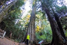 MacMillan Provincial Park (Cathedral Grove) on Vancouver Island - on this list of 32 outdoor things to do on Vancouver Island Western Canada, Vancouver Island, Perfect Place, Cathedral, Things To Do, Road Trip, Homes, Park, Places