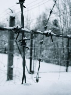 Barbed wire fence at Dachau, Germany - 2010