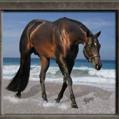 He's awesome!  Want him for my mare.