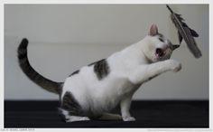 Cat by Nigel Lomas on 500px