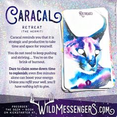 Wild Messengers is raising funds for Wild Messengers Alchemical Tarot Card Deck and Guidebook on Kickstarter! Channel the wild messages of the animal kingdom in this unique tarot deck and richly intuited guidebook. Animal Meanings, Animal Symbolism, Animal Spirit Guides, Spirit Animal, Tarot Card Decks, Tarot Cards, Power Animal, Practical Magic, Tarot Readers