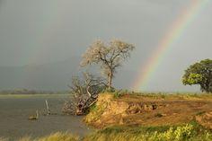 The Zimbabwe Parks & Wildlife Authority website Zimbabwe, Parks, Places To Go, Wildlife, Management, Country Roads, Author, Holidays, Website