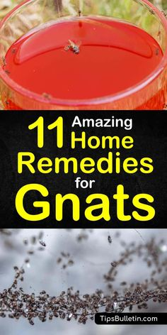 Kill Gnats In House, Gnats In House Plants, How To Get Rid Of Gnats, Getting Rid Of Gnats, Gnat Repellant, Insect Repellent, Gnat Bites, Fruit Flies In House, Diy