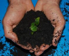 How to improve your garden - Compost. Learn about how every day items in your kitchen can improve your garden's soil.