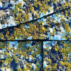 187 vind-ik-leuks, 11 reacties - Bronwen Gwillim (@bronwengwillim) op Instagram: 'Delicate blue shadows on white lichen'