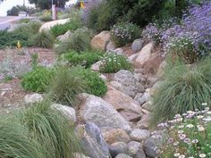 natives with dry creek bed