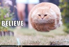 """Hover-cat says, """"Believe!""""     pinned by www.affordablecomp.net"""