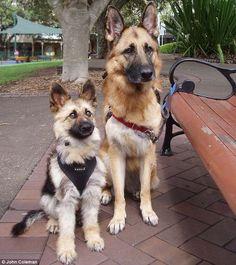 Os cachorros Tiger e Lydia. (Foto: Reprodução / Daily Mail UK)
