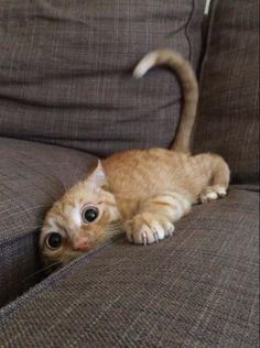 This little kitty slipped http://ift.tt/2kQVZO3