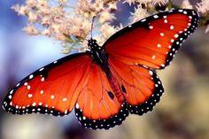 mariposas - Google Search