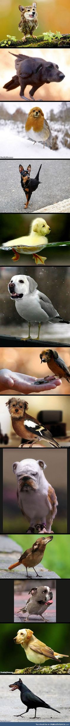 DOGS + BIRDS - Funny pictures and memes of dogs doing and implying things. If you thought you couldn't possible love dogs anymore, this might prove you wrong. Animals And Pets, Funny Animals, Cute Animals, Funny Animal Pictures, Cute Pictures, What Is A Bird, Fur Babies, Creatures, Birds