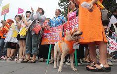 """한국일보 : 사회 : """"복날 없애라"""" 동물보호단체 중복 개고기 반대 집회: S KOREA'S DOGGIE METS PARTY 2 MILLION DOGS A YEAR..."""