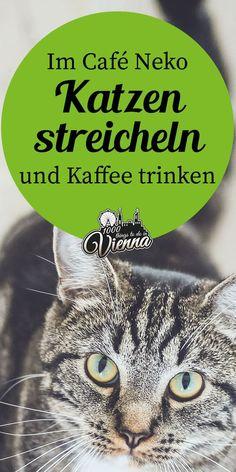 Katzen streicheln und gleichzeitig Kaffee trinken - Das geht im außergewöhnlichen Kaffee Neko in Wien. Neko, Restaurant Bar, Sailing, Road Trip, Tours, World, Travelling, Berlin, Restaurants