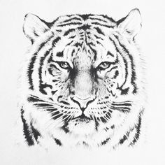 Tiger tatoo. Penna nera su carta.