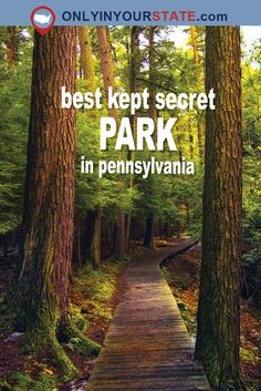 Salt Springs State Park might be the best-kept secret in Pennsylvania. Not many travelers make it to this state park, but it's a treat for those who do! Vacation Places, Vacation Destinations, Vacation Spots, Places To Travel, Vacations, Vacation Trips, Weekend Trips, Day Trips, Camping In Pennsylvania