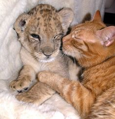 The Cat and Her Cub