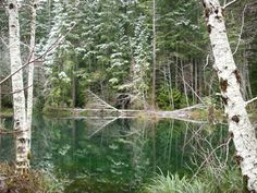 Winter Reflection on Lake Laird,  up the Elk River, Port Orford, Oregon  *dansuehath