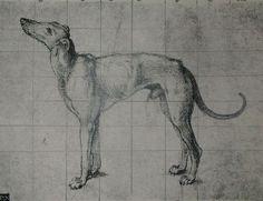 Dürer - Lévrier - 1491 - mise au carreau