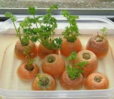 Planting fruits and vegetables