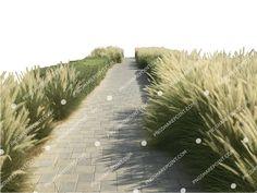 Sidewalk, Country Roads, Photoshop, Landscape, Plants, Image, Scenery, Side Walkway, Walkway