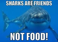Sharks are friends NOT FOOD !!!! Save the sharks !!!!!