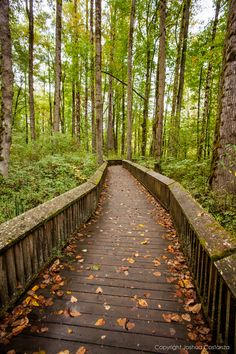 Nisqually National Wildlife Refuge at the Start of Fall