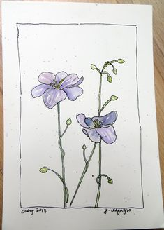 from my sketchbook - Lesson 4: Flowers - Sketching & Watercolor: Journal Style ~ January 2016