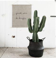 Cactus in basket. Indoor Garden, Garden Plants, Indoor Plants, Patio Plants, Succulent Hanging Planter, Hanging Plants, Tall Cactus, Cactus Plante, Plants Are Friends