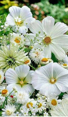 Flowers and Nature Special Flowers, All Flowers, Amazing Flowers, My Flower, Colorful Flowers, White Flowers, Beautiful Flowers, Moon Garden, Nature Artwork