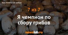 Квиз: Какой из вас грибник / Квизы / Newslab.Ru