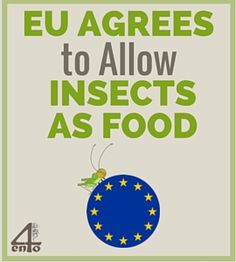 Europe has finally reached an agreement on the new Novel Food laws and how it affects insects as food. Find out the details.