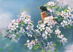 Robin in Apple Blossoms by Susan Bourdet
