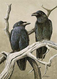 Kate Olson Design ravens-corvids-the-occasional-crow Quoth The Raven, Raven Bird, Raven Totem, Crow Art, Bird Art, Illustrations, Illustration Art, 4 And 20 Blackbirds, Blackbird Singing