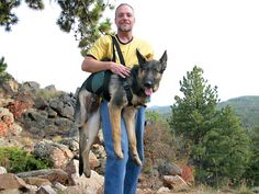 AST Get A Grip dog support harness