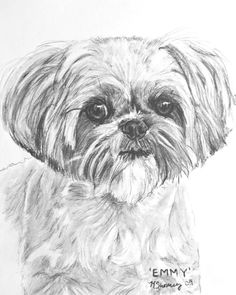 Realistic drawing of Shih Tzu. The Shih Tzu is an affectionate, happy, outgoing housedog who loves nothing more. Shih Tzu Hund, Perro Shih Tzu, Shih Tzu Puppy, Shih Tzus, Lhasa Apso, Animal Paintings, Animal Drawings, Dog Drawings, Charcoal Sketch