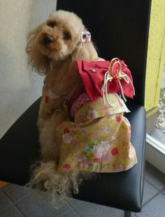 KIMONO DOG  I'm HAPPY poodle